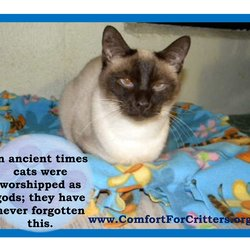 Animal Shelters We Support Comfort For Critters